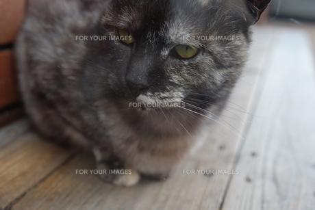 猫 FYI00545323