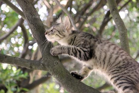 木登りする猫 FYI00547164