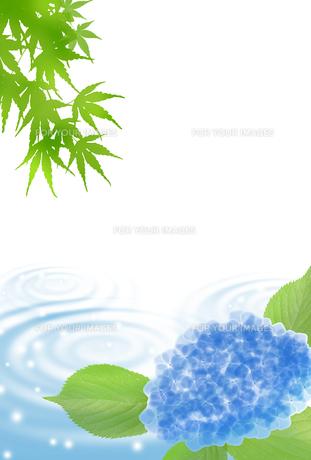 暑中見舞い アジサイ 金魚 青紅葉 FYI00567071