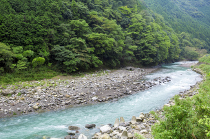 和歌山県有田川上流 FYI00576298