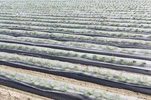 plant FYI00578866