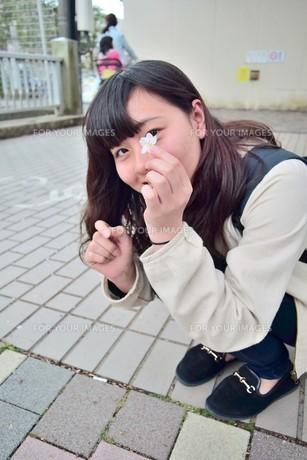 桜、みーつけた FYI00593966