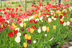 植物園 FYI00598473