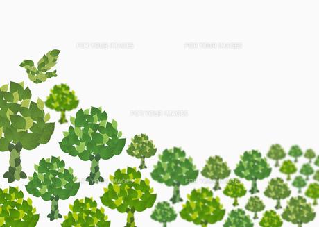 森林イメージ FYI00603329