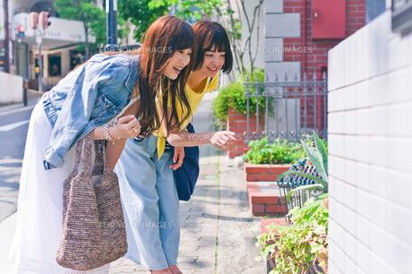 植物を指差す女性 FYI00603693