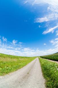 夏の田舎道 FYI00619288