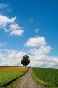 畑の中を通る砂利道と夏の空 FYI00619299