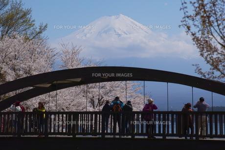 富士を望む FYI00621139