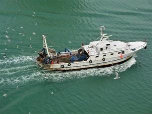 漁船とカモメ FYI00623000