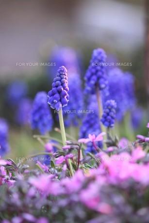 とんがり冒風かわいい花 FYI00624826