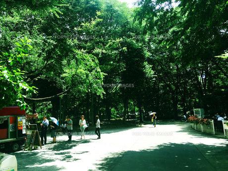新宿散歩2 FYI00627818