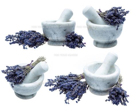 Lavender FYI00641017