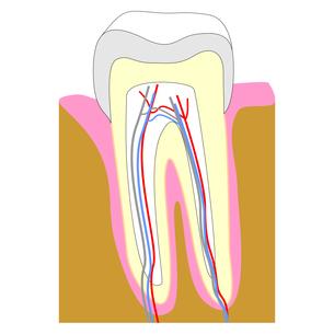 teeth FYI00645353