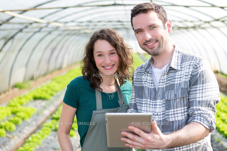 Farmers watching stats on tablet FYI00646797
