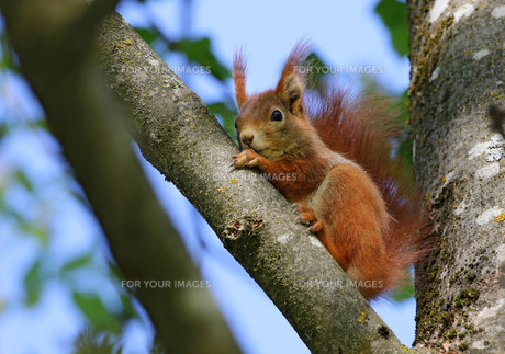 squirrel FYI00647267