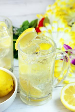 レモンサワー FYI00655705