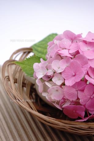 ピンク色のアジサイの和風アレンジメント FYI00655851