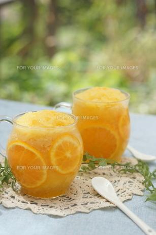 オレンジシャーベット FYI00665070