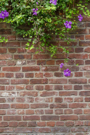 wall with flowers FYI00665459