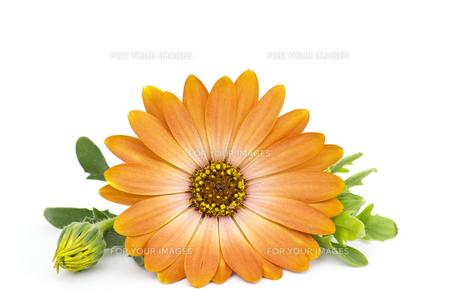 plants_flowers FYI00666157