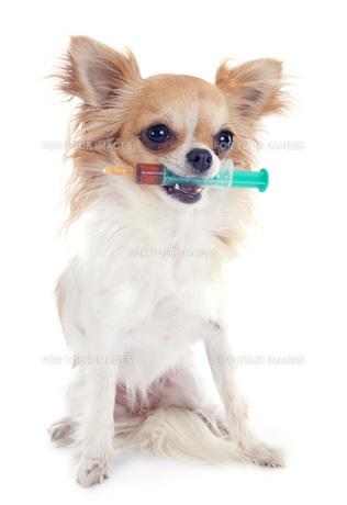 dog FYI00668580