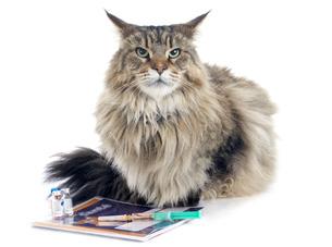 pussycat FYI00668585