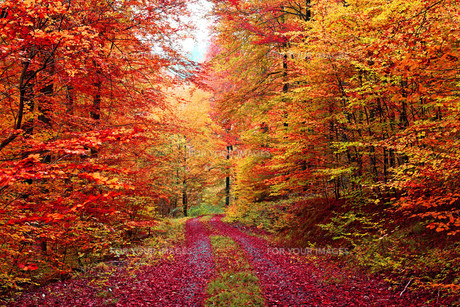 superb colors autumn forest road in october FYI00673644