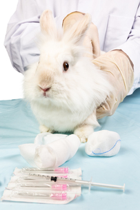 white rabbit is scanned at the vet FYI00674025
