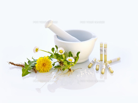 mortar daisy dandelion nature medicine FYI00680052