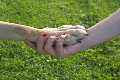 home_animals FYI00696379