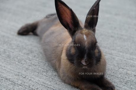 ウサギ FYI00736464