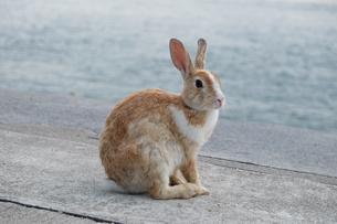 海とウサギ FYI00736465