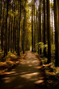 夕焼けの林道 FYI00737049