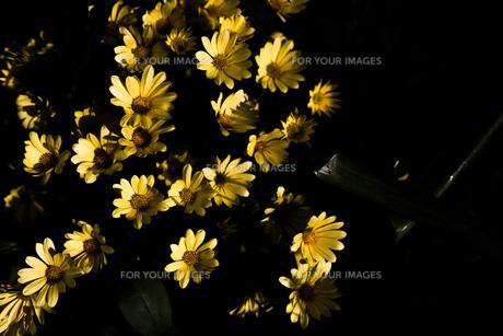 暗闇の中の花 FYI00737406