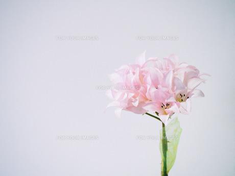 お店の中の素敵な造花 FYI00737497