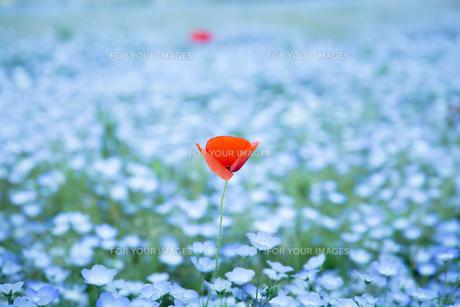 青とオレンジの花 FYI00737503
