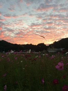 秋の夕焼け FYI00737991