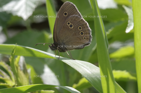 butterfly sitting on a leaf FYI00749627