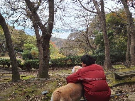 犬と眺める FYI00767060