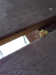 カエル眺める FYI00767089