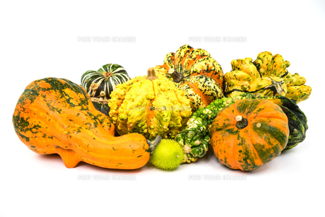 ornamental pumpkin on white background FYI00789469