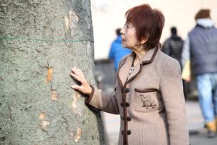 私もこの木くらい長生きしたいわぁとおばあちゃんの素材 [FYI00795533]