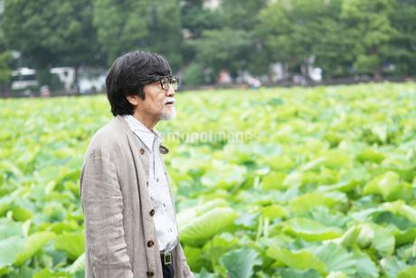 蓮を眺めるおじいちゃん FYI00795554