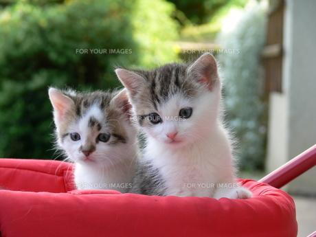 home_animals FYI00797193