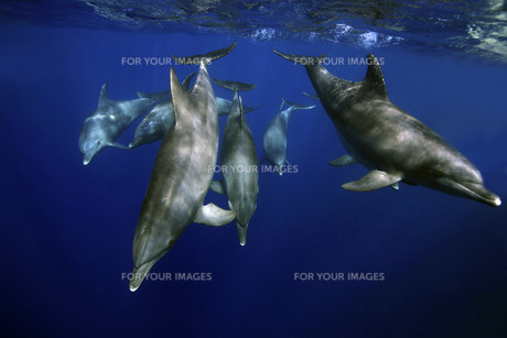 underwater_world FYI00798499