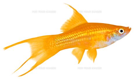 fishes_crustaceans FYI00803905