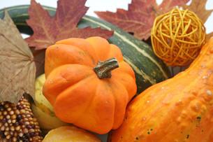 pumpkin FYI00804481