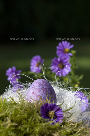 easter eggsの素材 [FYI00807675]