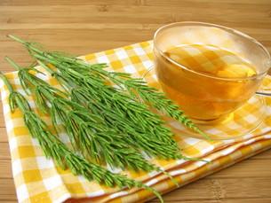 tea with field horsetail FYI00807856