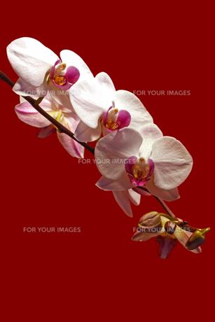 plants_flowersの素材 [FYI00834334]